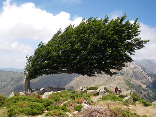 brown_tree_in_the_wind_by_capix80[1].jpg